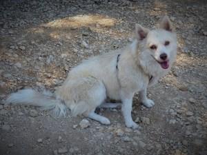 Uca - chiens adoptés en 2015