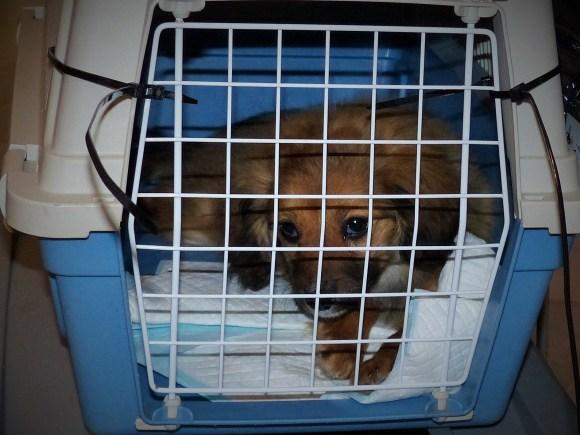 Zaza - chiens adoptés en 2015