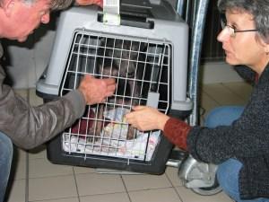 Mika à l'aéroport Charles De Gaulle (2 novembre 2011 – 9H30)