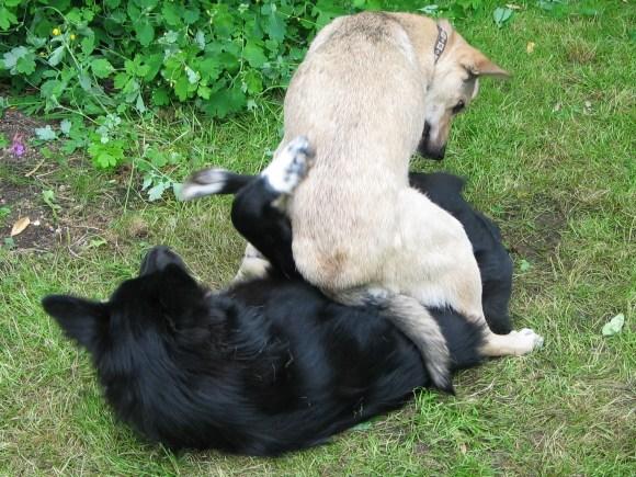 Molly et Momo adoraient jouer ensemble