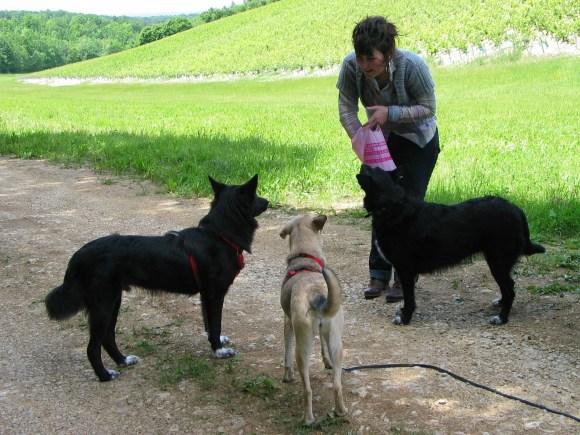 Momo, Molly et Galipette (avec Sarah) - 8 juin 2012