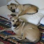 Molly et Lila (1er juillet 2012)