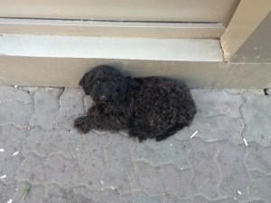 Blacky - chiens adoptés en 2013
