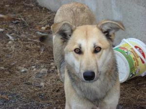Dolly - chiens adoptés en 2013