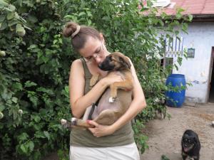 Liza - chiens adoptés en 2013
