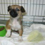 Betty (8) chez le vétérinaire (4 décembre 2012)