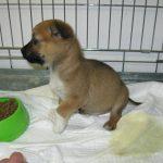 Betty (9) chez le vétérinaire (4 décembre 2012)