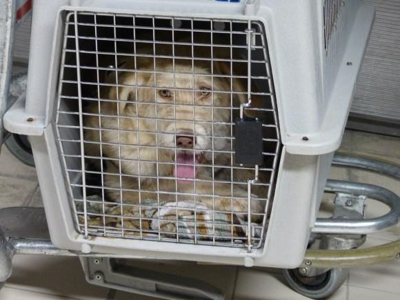 Trésor - chiens adoptés en 2013