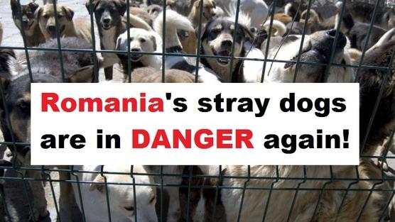 Massacre des chiens errants
