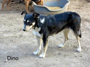 Sauvetage des 7 chiens dans la rue (mi-septembre 2013)