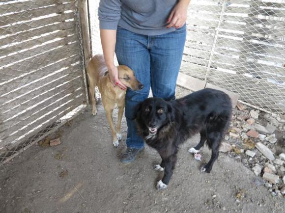 Tzupy et Benny au refuge (fin octobre 2013)