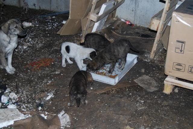 Maison en carton pour une famille de 7 chiens (2009)_02