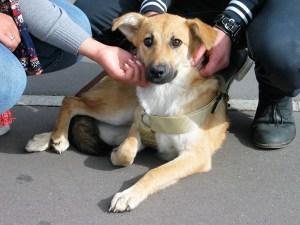 Capri - chiens adoptés en 2011