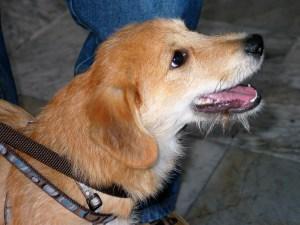 Nino - chiens adoptés en 2011