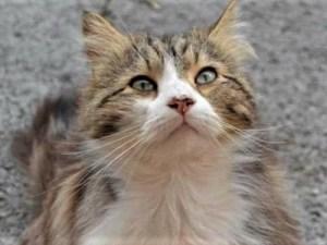Chevelu, chat de Draguignan