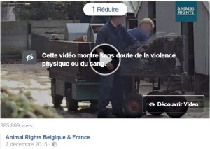 Animal Rights_Gazage des visons