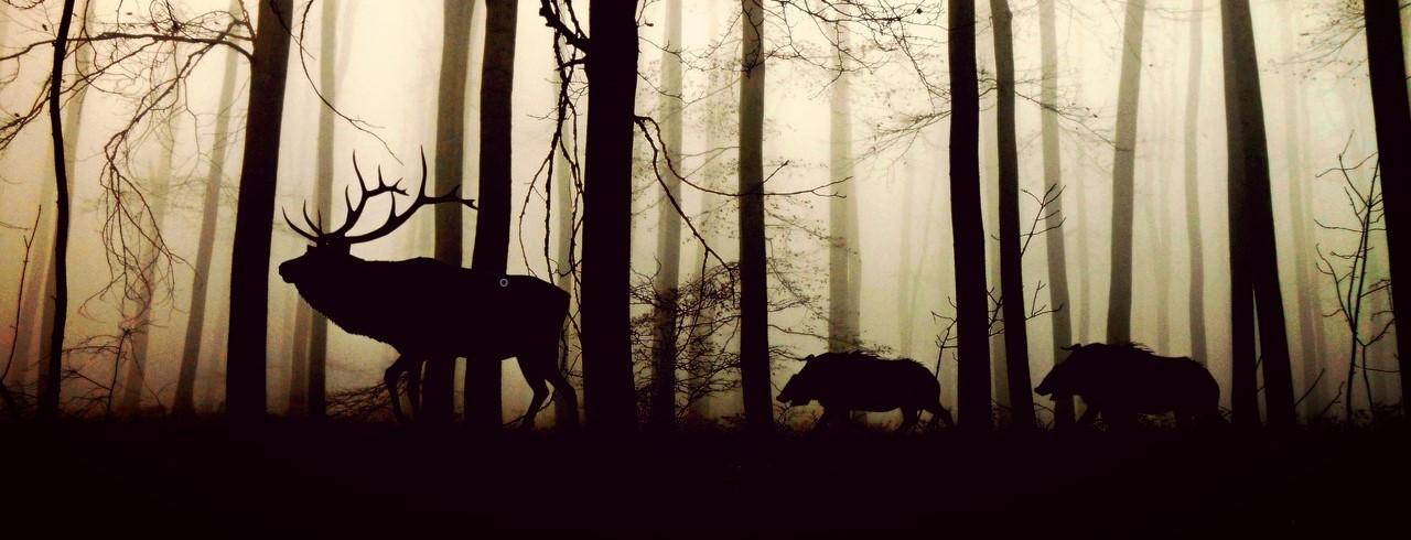 Cerf et sangliers