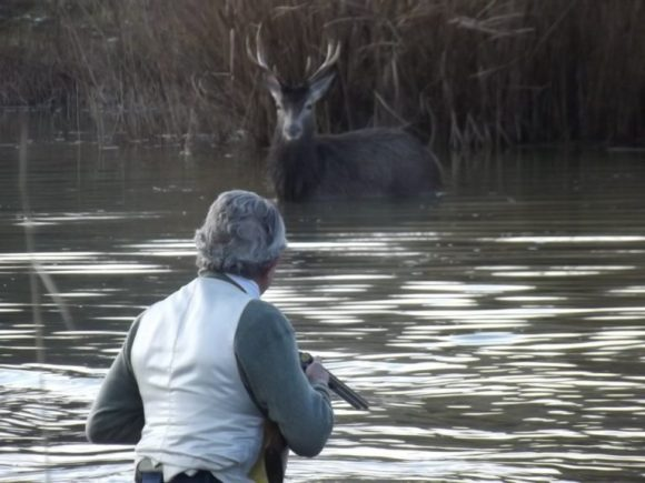 Chasse à courre_02