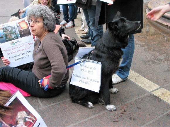 Danielle et Momo contre le massacre des animaux en Ukraine - 31 mars 2012