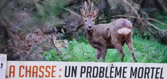 La chasse - un problème mortel_octobre 2019