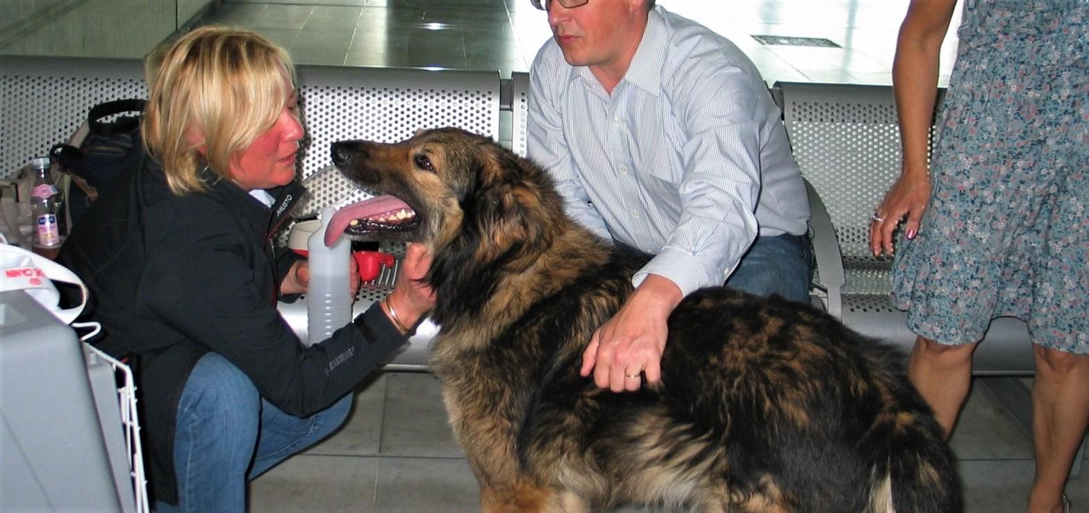 L'arrivée de Ringo à l'aéroport de Roissy CDG_juin 2012