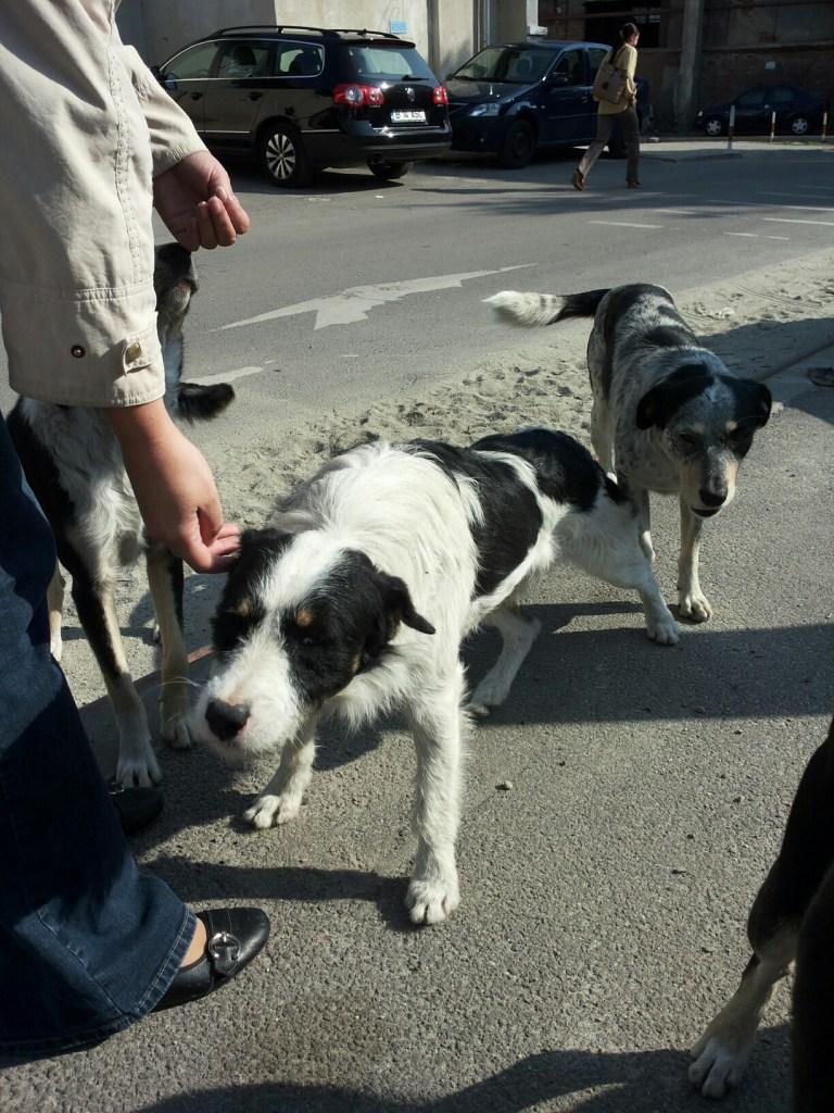 Les 7 chiens dans la rue_02 (mi-septembre 2013)