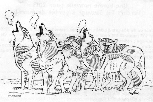 Loups tirs de loups imposture