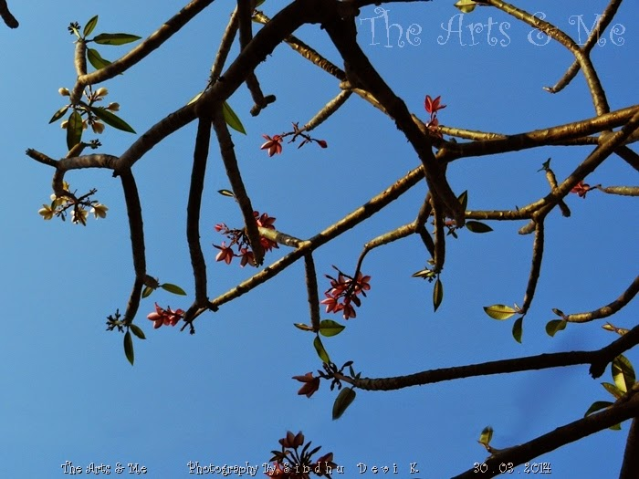 Spring Time - flowers on the bare twigs - Photography at Aditi Garden, Pune