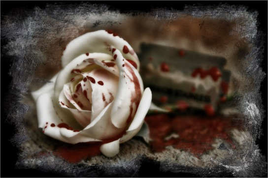 White Rose With Blood DesiComments Com