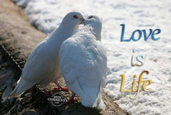 Love Is Life DesiComments Com