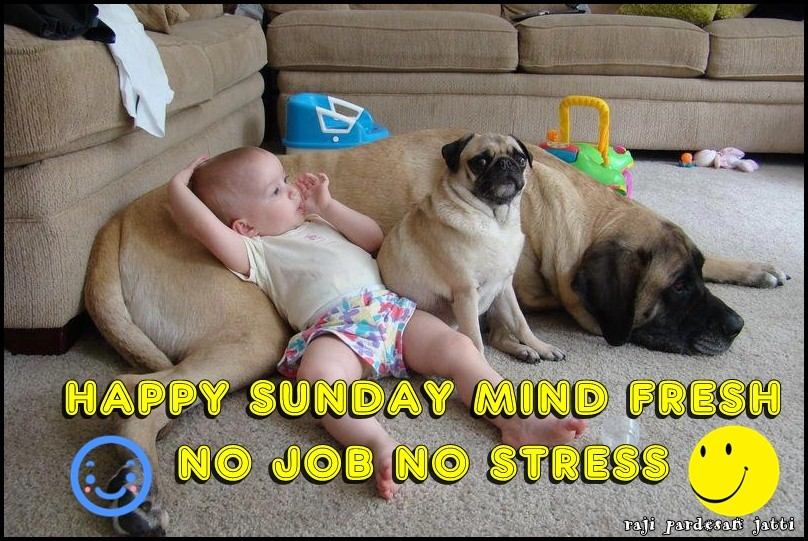 Cute Funny Wallpapers For Lazy Peopke Happy Sunday Desicomments Com