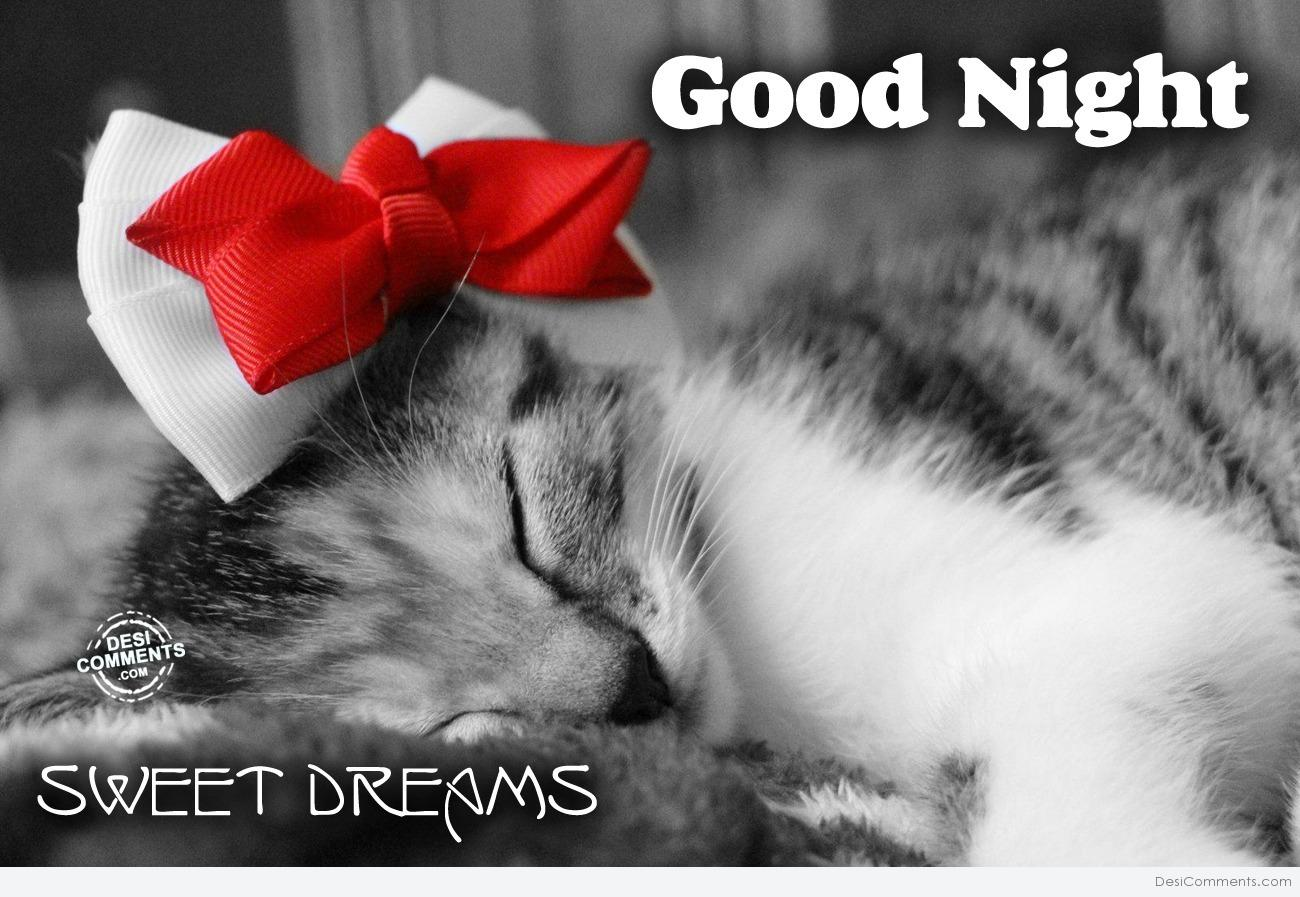 Cute Wallpapers With Quotes Hindi Good Night Cat Desicomments Com