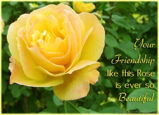 Bff Quotes Wallpapers Friendship Like Rose Desicomments Com