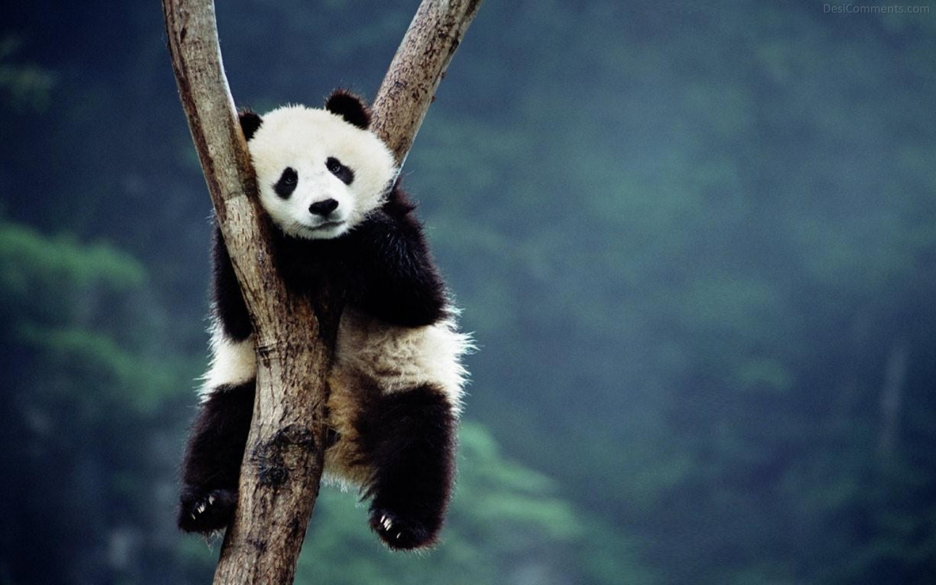 Love Wallpaper With Quotes In Hindi Panda Sitting On A Tree Desicomments Com