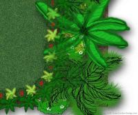 Tropawaii - Tropical Garden Plan