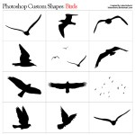 Bird Shapes