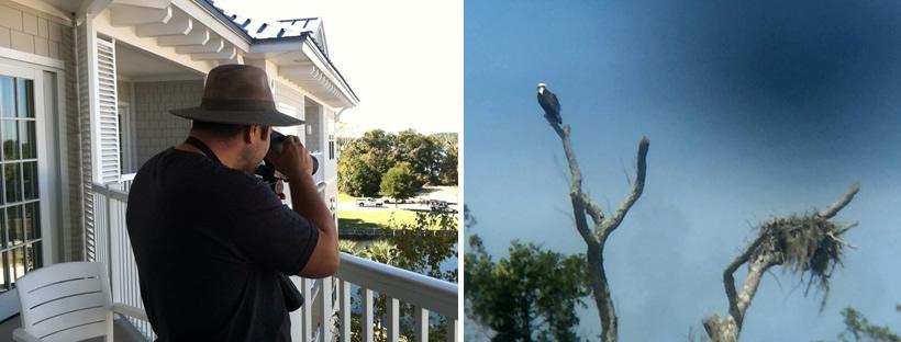 Bird Watching on Hilton Head Island