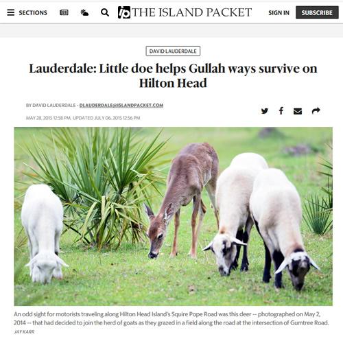 Lauderdale: Little doe helps Gullah ways survive on Hilton Head David Lauderdale Island Packet (Hilton Head Island News Paper) May 28, 2015
