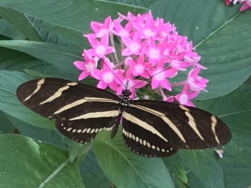 Karen Wertheimer Butterfly Enclosure, Coastal Discovery Museum at Honey Horn