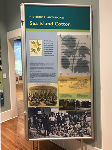 Sea Island Cotton - Coastal Discovery Museum at Honey Horn