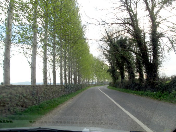 Somewhere between Thomastown and Carrick-on-suir, Ireland