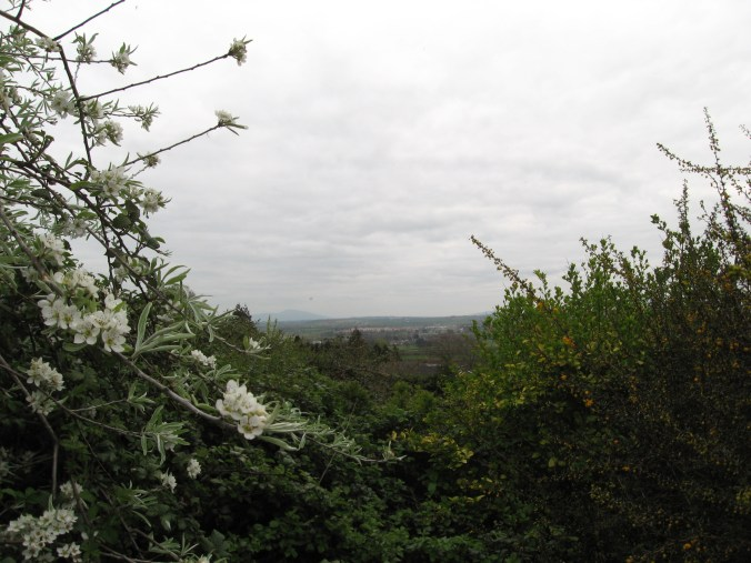 View from Hollymount House, Cahir, County Tipperary