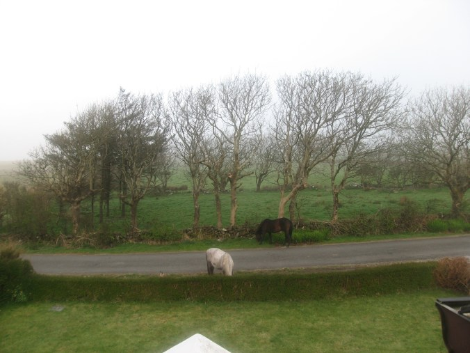 Look! New Foal! at Craggy Island B&B, Ardeamush, Doolin, County Clare, Ireland