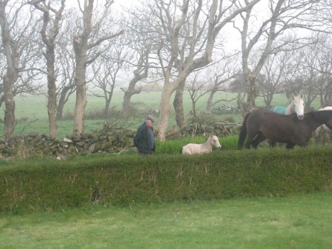 Look! New Foal! at Craggy Island B&B, Ardeamush, Doolin, County Clare, Ireland