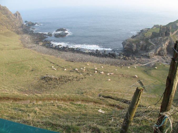 Sheep near Kinbane Headland and Kinbane Castle, near Ballycastle in County Antrim, Northern Ireland