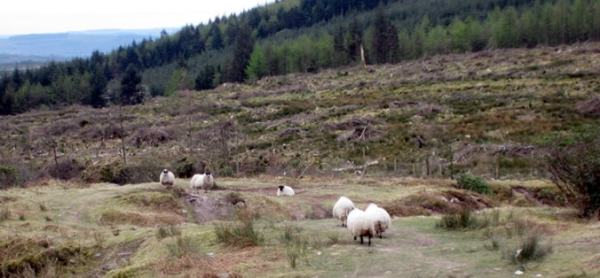 Lismore to the Knockmealdown Mountains
