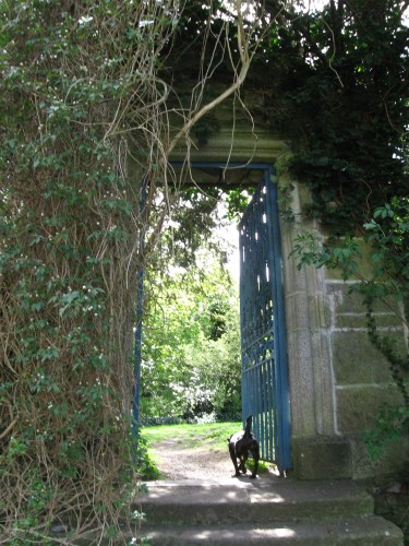 Dog leading me through a gate at Leixlip Castle