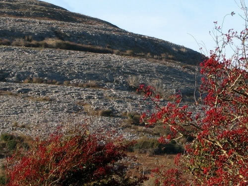 Autumn in Burren Photo by Netzach - Plants and Flowers of the Burren - A Different Visit to Ireland