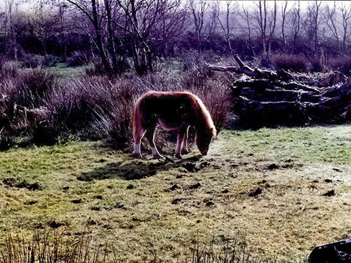 Bog pony at Kerry Bog Village, Ring of Kerry Photo by Joseph Mischyshyn