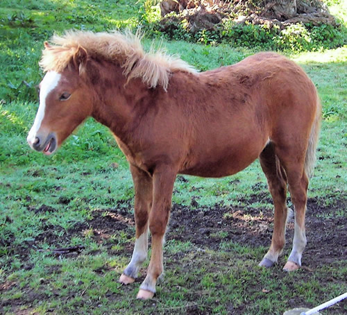 Kerry Bog Pony, Bog Village, Kerry, Ireland Photo by Jim Linwood